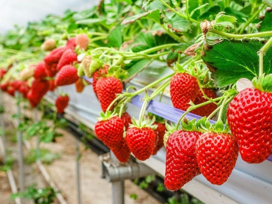 Neden topraksız tarım