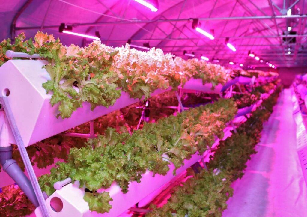 Topraksız Tarım Yöntemleri
